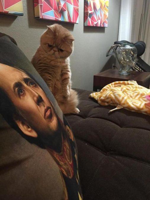 Действительно листарым девам нужны кошки