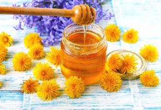 Мед из одуванчиков — польза и рецепты