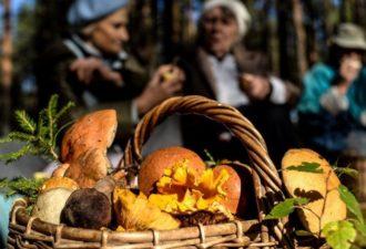 9 правил «тихой охоты»: как не отравиться в разгар грибного сезона?
