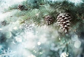7 новогодних примет на удачу и деньги. Как встречать Новый год, чтобы он стал счастливым?