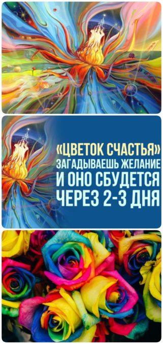 «Цветок счастья»: загадываешь желание и оно сбудется через 2-3 дня…