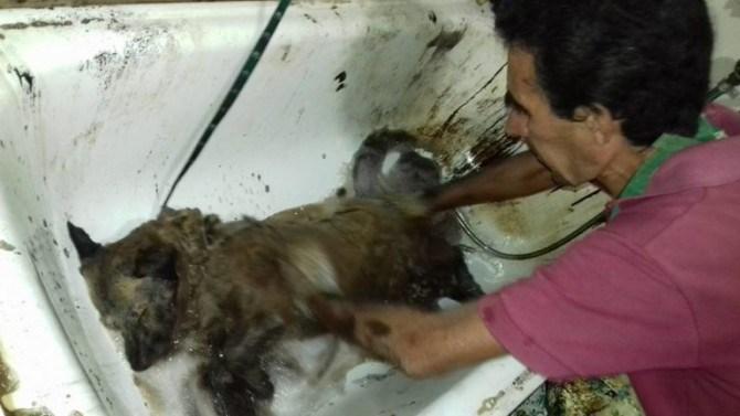 Пес, которого облили смолой, бродил по городу, пока не его не нашли люди с большим сердцем