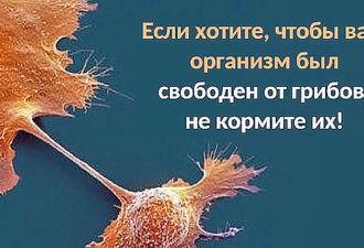 Если хотите, чтобы ваш организм был свободен от грибов, не кормите их