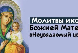 Чудодейственная молитвы иконе Божией Матери «Неувядаемый цвет»
