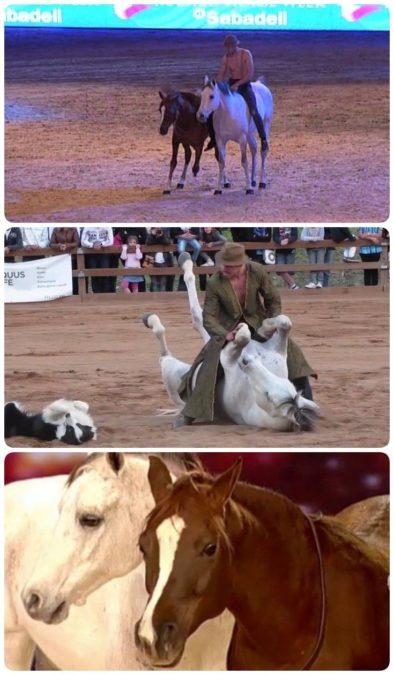 Он наклонился, чтобы поцеловать свою лошадь. Реакция зверя — просто фантастика!