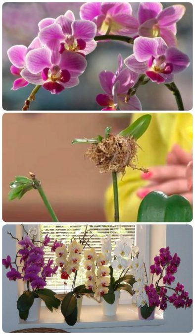 Секреты рассадки орхидей: как превратить 1 растение в 100!
