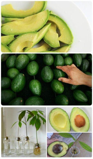 Хватит тратить деньги на авокадо. Прочтите и купите его в последний раз.