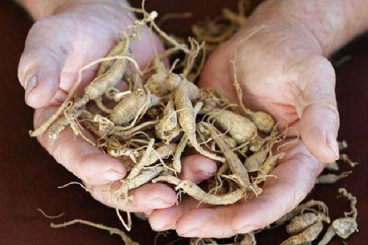 Травы, которые проникают в суставы и восстанавливают хрящи