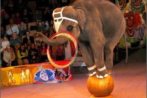 Италия проголосовала за закон о запрете использования всех животных в цирках и передвижных ярмарках…