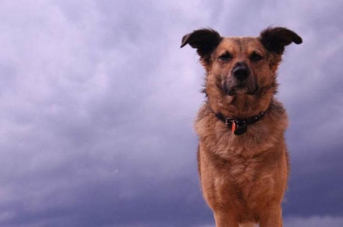 Пять вещей, которые собаки чувствуют задолго до того, как человек их заметит