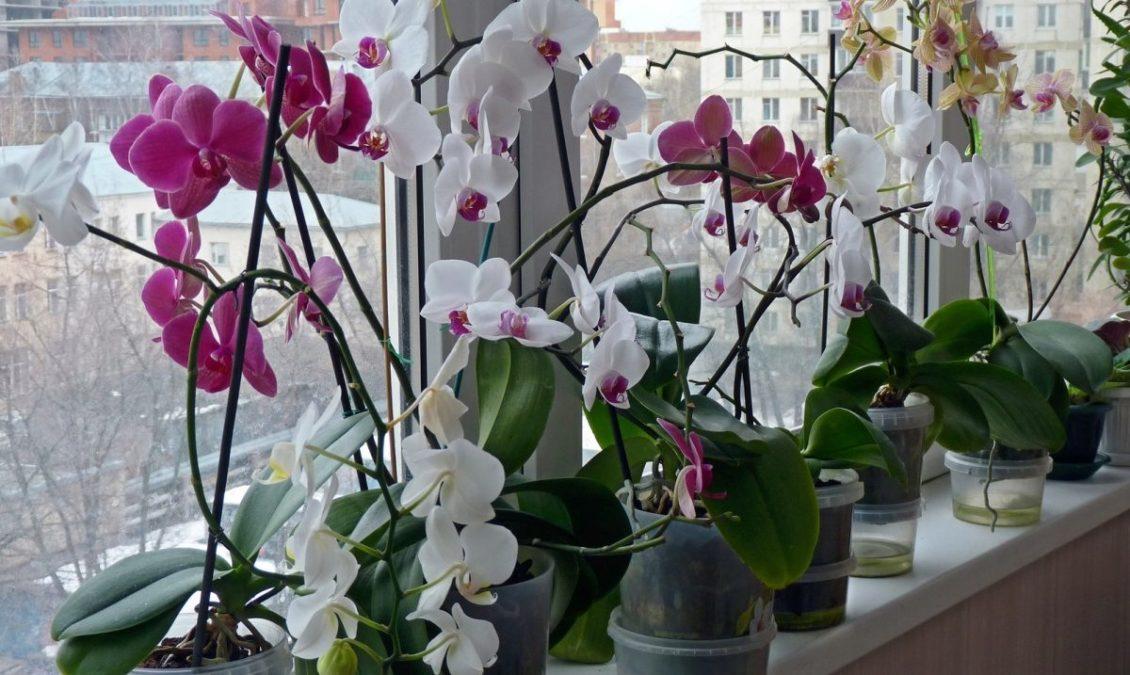 9 правил по уходу за орхидеей, благодаря которым она будет буйно цвести круглый год
