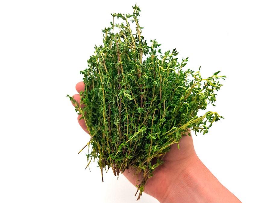 Тимьян - трава, которая лечит более полусотни недугов!