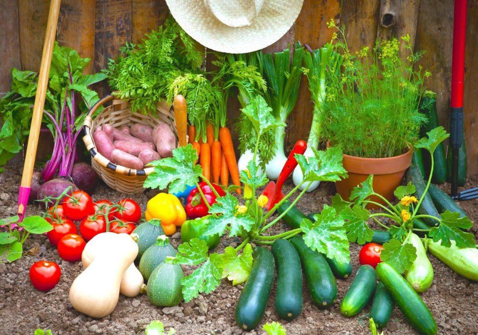 Картинки о саде и огороде