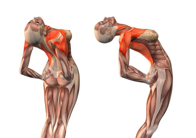 Эти упражнения освобождают сосуды от зажимов и выпрямляют позвоночник