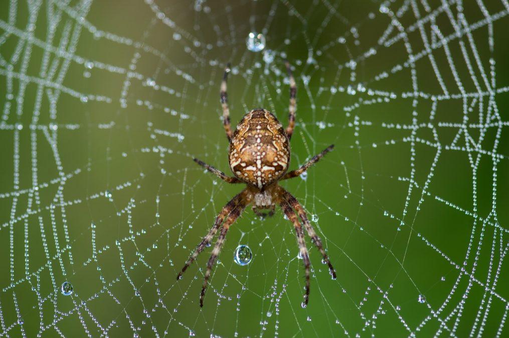 Излечить, даже, самые тяжелые раны поможет паутина.