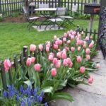Посадка тюльпанов осенью и самые распространенные ошибки.