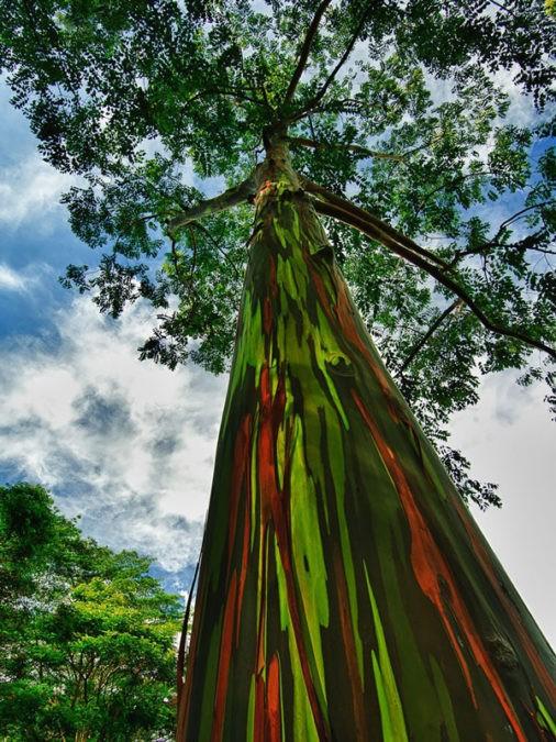 Деревья изумительной красоты