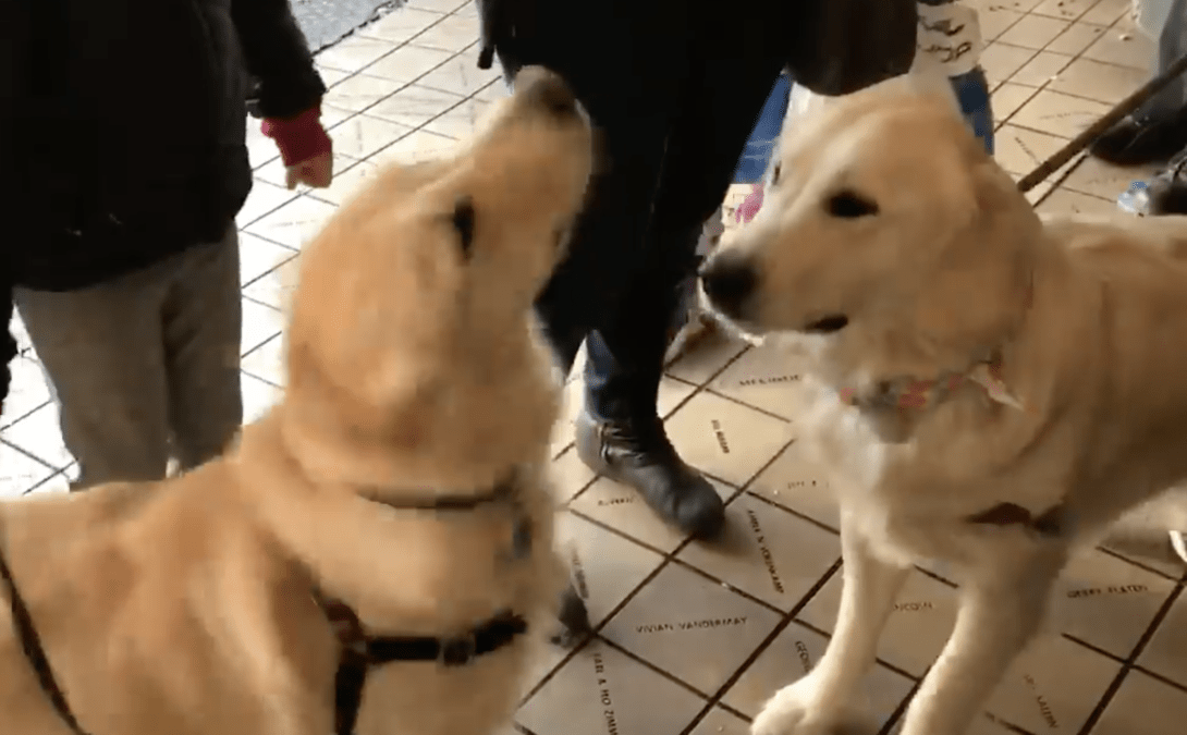 Незнакомые собаки бросились навстречу друг к другу в магазине.
