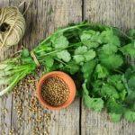 «Трава бессмертия» избавит вас от более чем 45 заболеваний!