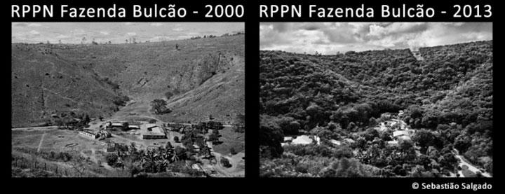 Бразильский фотограф высадил 2 миллиона деревьев за 20 лет