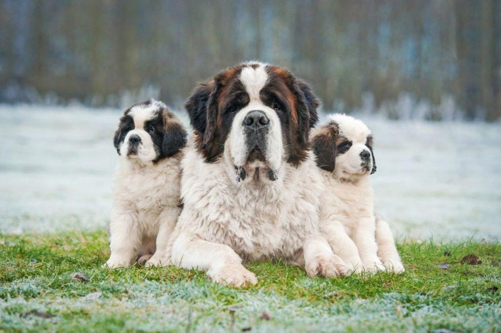Решили завести собаку-друга? Вот вам 5 добрейших пород.