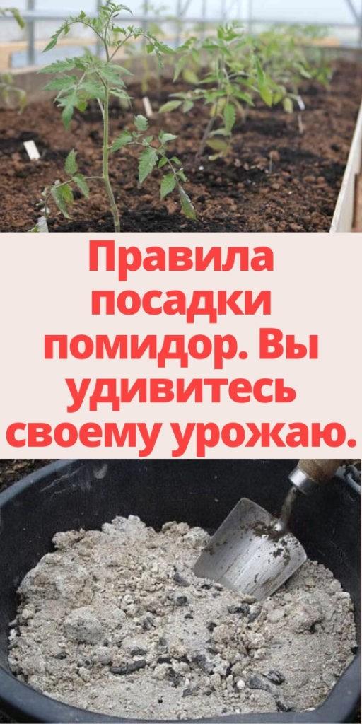 Правила посадки помидор. Вы удивитесь своему урожаю.